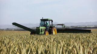 El sector agrario pide al Gobierno medios para garantizar el suministro de alimentos