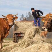 """El sector ganadero se une frente a los ataques """"interesados"""" a la carne"""