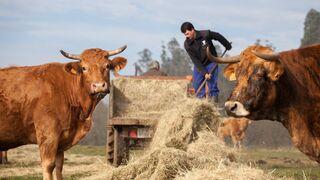 Los ganaderos denuncian la criminalización de la carne de Pedro Sánchez