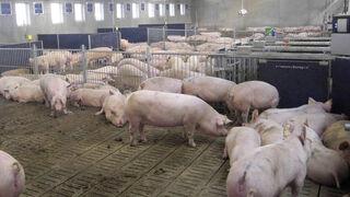 Nuevas medidas en vigor para garantizar la seguridad alimentaria en Europa