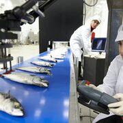 10 recomendaciones sobre seguridad alimentaria para empresas ante el COVID-19