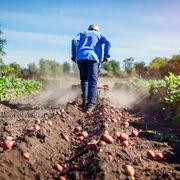 Consideraciones al informe de la CNMC del anteproyecto de ley  de la cadena alimentaria