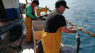 El Gobierno aprueba 13,3 millones para ayudas a la ganadería y la pesca