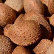El sector de frutos secos prevé una cosecha de almendra de 95.600 toneladas en 2020