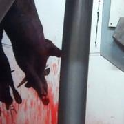 Avalancha legislativa para instalar cámaras en los mataderos de España