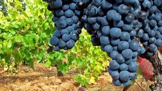 """Año de """"total incertidumbre"""" para el sector vitivinícola"""
