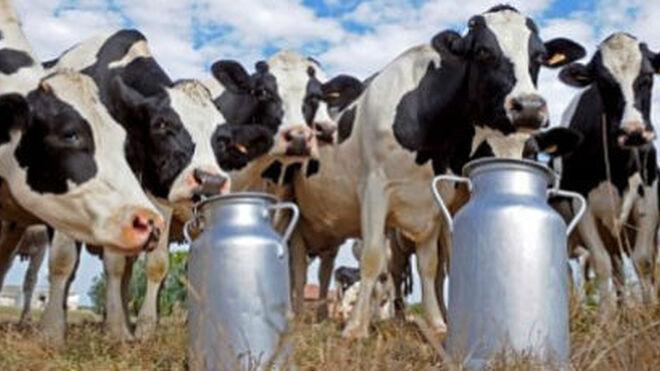"""Los ganaderos se sienten """"amenazados"""" para aceptar rebajas en el precio de la leche"""
