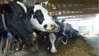 Los datos contradicen al Gobierno: la carne no contamina más que otras industrias