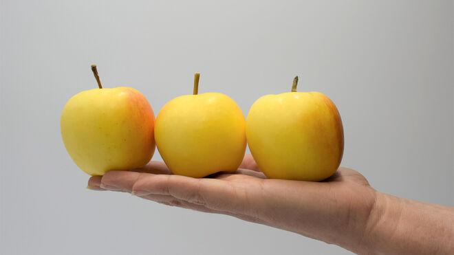 Snacking Project, nuevo consorcio para desarrollar el mercado de manzanas snack