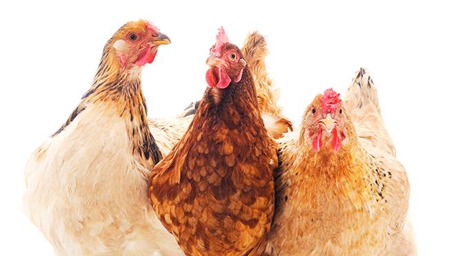 Los productores de huevo piden un compromiso social para asumir el coste de criar sin jaulas