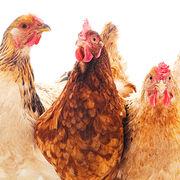 Huevos libres de jaula: por qué unirse a este movimiento imparable