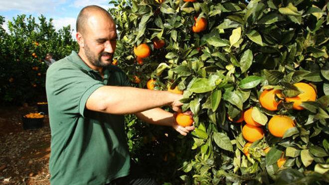 El veto de Rusia hunde más las exportaciones agroalimentarias españolas