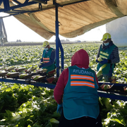 Los agricultores dan la espalda a los sindicatos: van a trabajar en masa durante la huelga