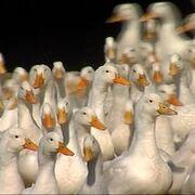 Nueva alerta: China detecta el primer caso de gripe aviar H10N3  en humanos