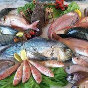 La industria se prepara para el pescado de laboratorio: merluza y atún a partir de células madre