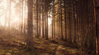 La sostenibilidad en retail: más allá del verde