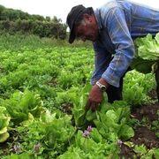 La industria de alimentación y bebidas, vertebradora de las zonas rurales