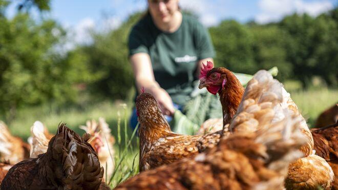 Pazo de Vilane editará un libro de recetas de huevos camperos con creaciones de sus clientes