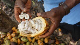La venta de cacao de comercio justo se dispara el 730% en España en cinco años