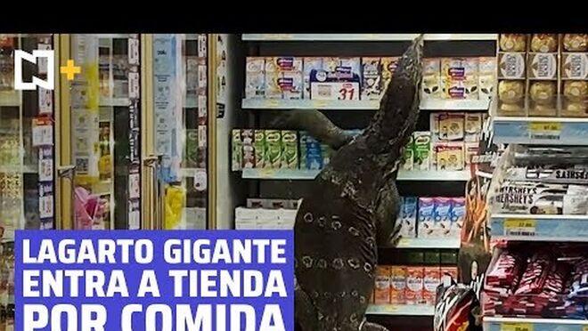Un lagarto gigante siembra el pánico en el supermercado
