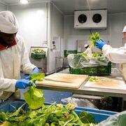 La producción de la industria alimentaria aumentó el 1,9% en febrero