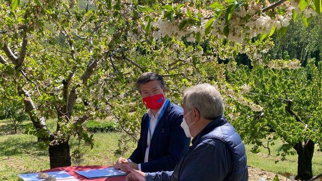 Carrefour venderá 500 toneladas de cerezas y picotas del Valle del Jerte