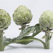 La calidad y frescura de la alcachofa Green Queen F1 garantizan la repetición de compra