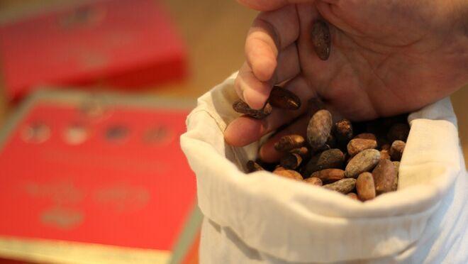 Nestlé utilizará cascarilla de cacao para producir energía verde