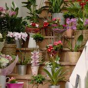 Lidl se lanza a competir en el sector de floristerías
