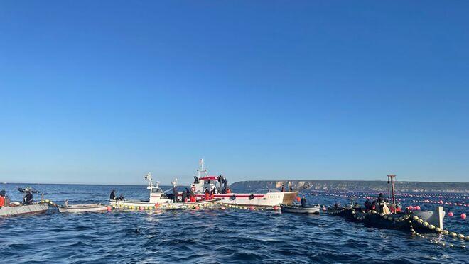 Ahorramás venderá atún rojo de la almadraba de Barbate