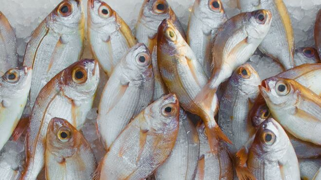 Por qué apostar por el pescado de acuicultura