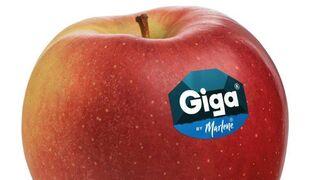 Giga, la nueva manzana de Marlene, llega a España
