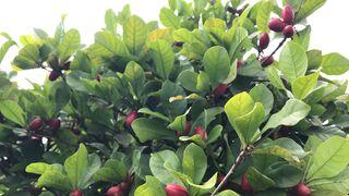 Baïa Food crea un nuevo alimento que convierte el sabor ácido en dulce
