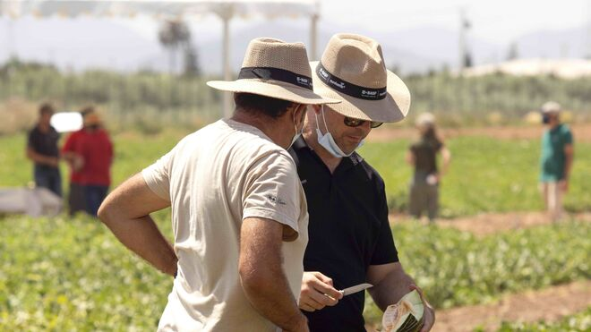 BASF presenta sus nuevas variedades de melones