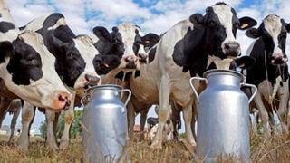 El sector lácteo denuncia deslealtad de los supermercados en la guerra de precios
