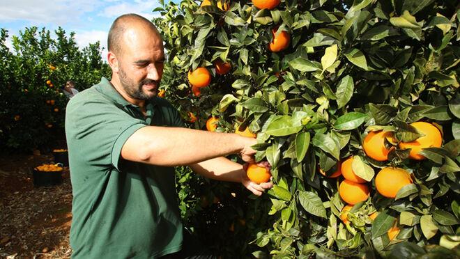 Los contratos en la agricultura bajaron el 21% en julio