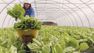 Vegalsa-Eroski destinó 196,3 millones a compras locales en el primer semestre