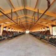 Cantero de Letur invierte 5 millones en su nueva granja caprina ecológica