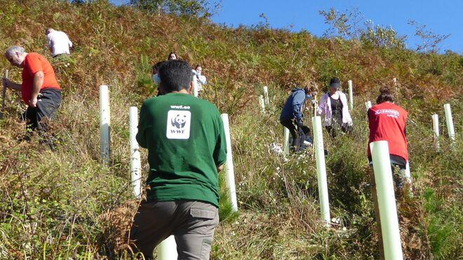 Voluntarios de Eroski plantan árboles para ayudar a la conservación de la naturaleza junto a WWF